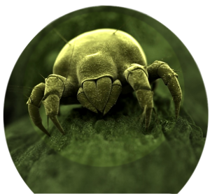 AATCC Dust Mite and Anti-fungal Testing