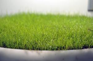 Bent Grass Plot