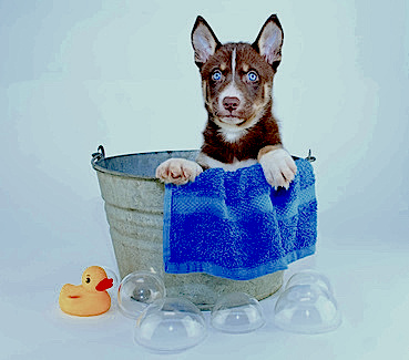 biodegradation and antimicrobial testing of pet care products provide ideal product solutions